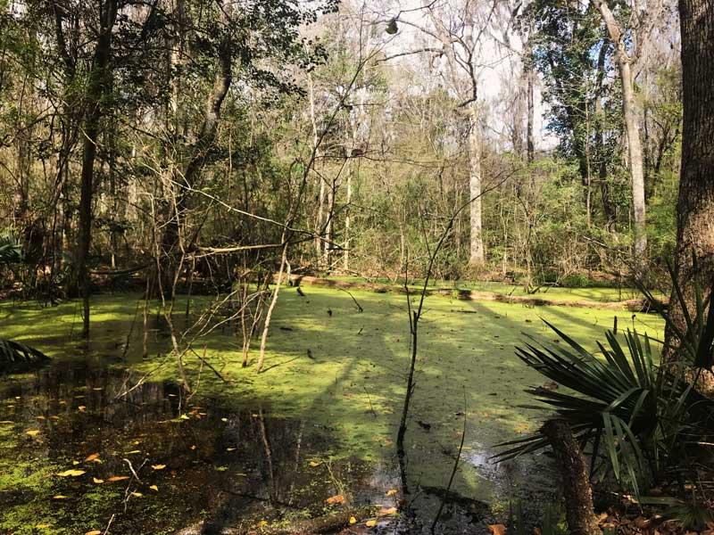 Swamp Lands on the best trail near Gainesville