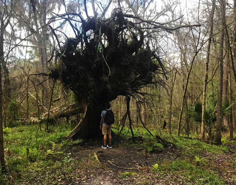 The best trail near Gainesville has massive trees