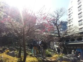 Yushima shrine with Plumflowers