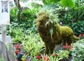 Nashville's Gaylord Opryland Resort lion topiary