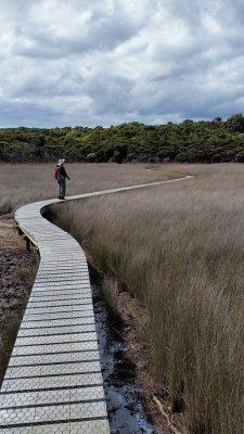 Catlins Estuary boardwalk