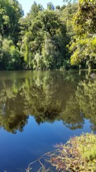 Reflections of trees in still lake along Heaphy Track