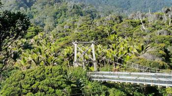 Heaphy river suspension bridge