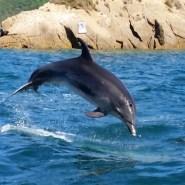 Marlborough Sound Dolphin