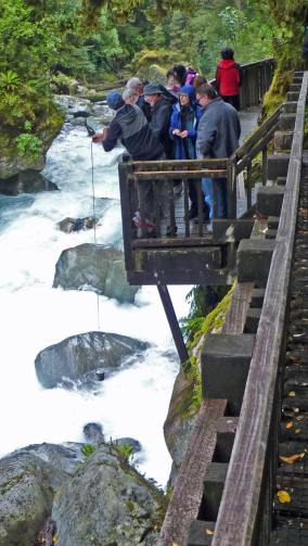 Taking a water sample for tasting, at one of Fiordland Tours trips to and from Milford Sound