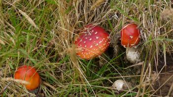 Stewart Island mushrooms