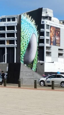 Eye-catching display in front of Te Papa museum in Wellington