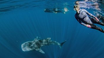 Exmouth Ningaloo Exmouth Diving Centre Whale Shark and Wendy photo credits kissthedolphin