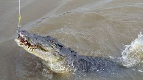 Spectacular Jumping Crocodile on Adelaide river
