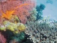 Muiron Islands + Ningaloo Reef colorful corals