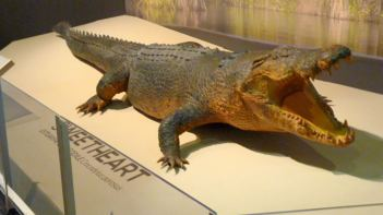 Crocodile named Sweetheart on display at Darwin's Museum and Art Gallery