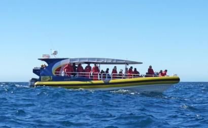 Tasman Island Pennicott Wilderness Journeys tour boat