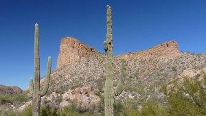 Saguaro and mountain, Apache Trail, Tortilla Flat, AZ