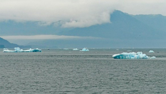 Icebergs from Meares Glacier float into Prince WIlliam Sound