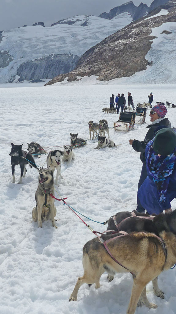 Sled dogs take a break from mushing at summer camp near Juneau