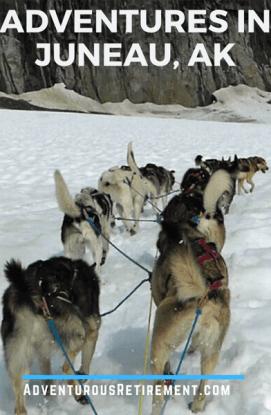 Summer dog sledding in Juneau Alaska