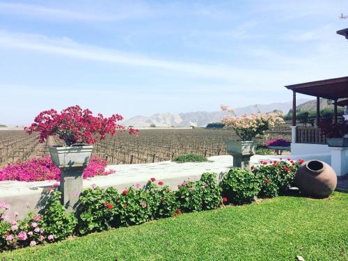 Garden at hotel Vi;as Queirolo - Ica