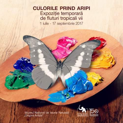 Culorile prind Aripi - Expozitie de fluturi tropicali vii la Muzeul Antipa