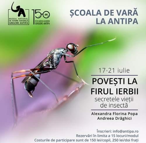 Poveşti la firul ierbii - secretele vieţii de insectă la Școala de Vară de la Antipa