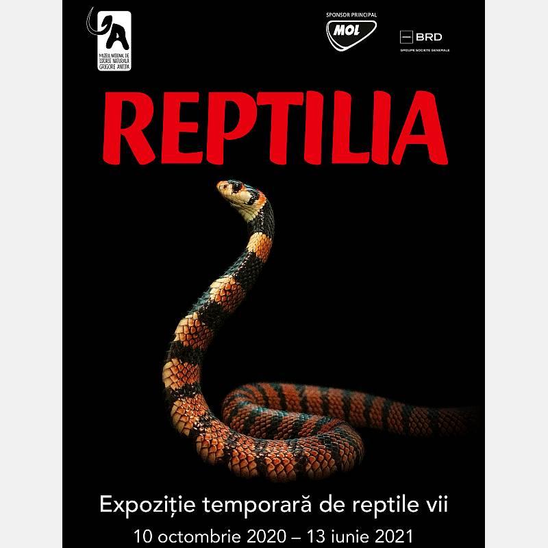 Reptilia - o nouă expoziție temporară la Muzeul Antipa!