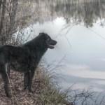 Asheville Dog Friendly Adventures