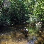 Brevard Fly Fishing Rivers