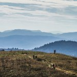 Guide To The Best Asheville Hikes + Hiking Trails