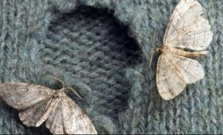 banish moths with dynatrap