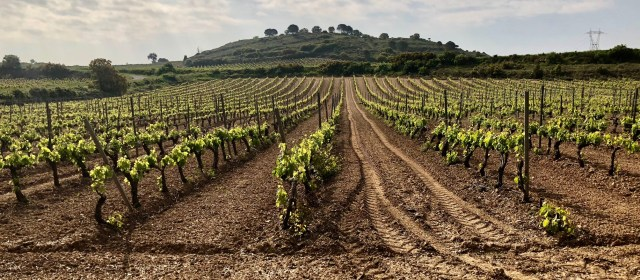 Bordeaux to Rioja: Following the Phylloxera Trail