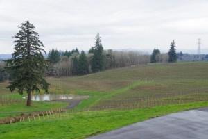 Dundee Hills Oregon