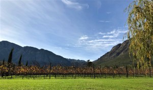 Franschoek wine