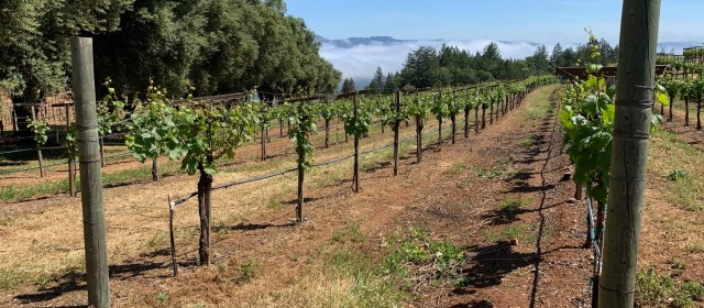 The Very Authentic Wines & Personalities of Smith-Madrone