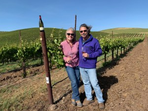 wildcat mountain vineyard los carneros