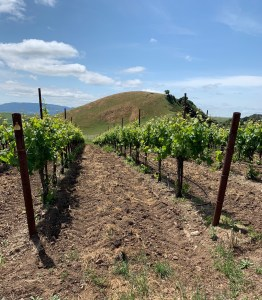 Wildcat mountain vineyard