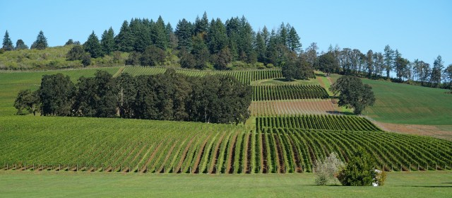 Stoller Family Estate: It Starts with a Vision