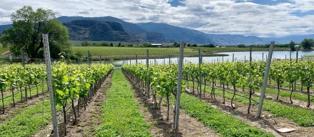 Video AdVINEture: British Columbia's Okanagan Valley
