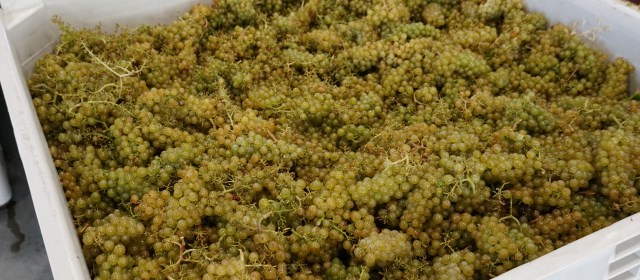 French Grapes Around the World: Chardonnay in BC's Okanagan Valley