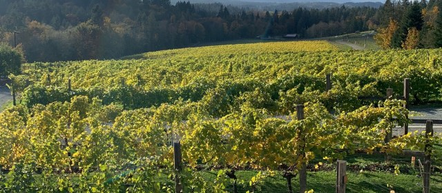 Blue Grouse Estate Winery: A Winning Recipe