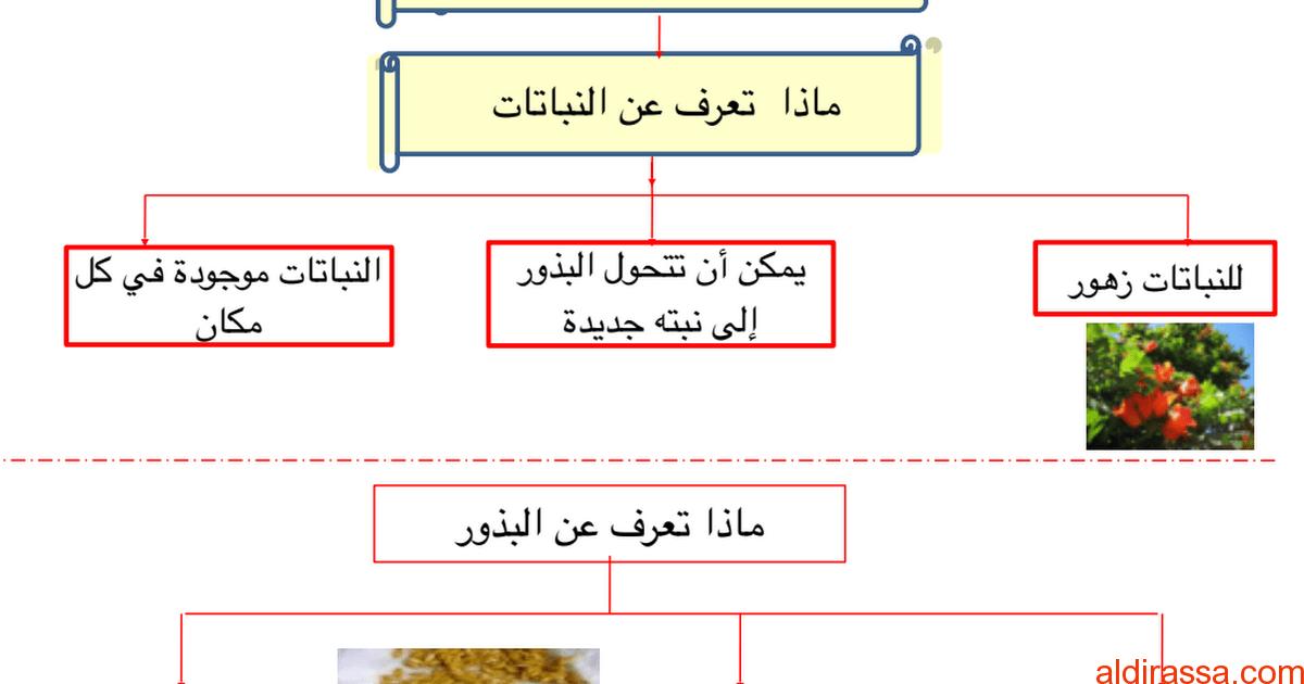 تلخيص وورق عمل وحدة النباتات علوم الصف الاول الفصل الاول