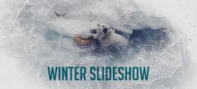 Winter Project Slideshow