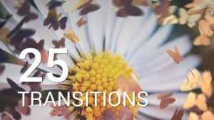 Butterflies Transitions