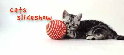 Cats Slideshow