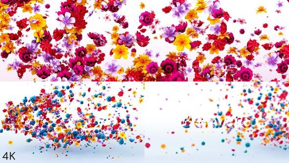 Flowers Logo Reveal 23972271 Videohive