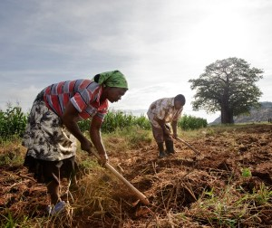 Workers preparing fields to grow corn, Gutu project irrigation site.