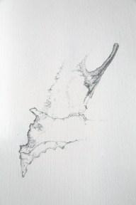 gladiolus (detail)