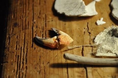 shells4