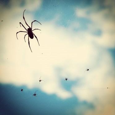 la-reunion-spider