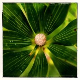 new-caledonia-plant