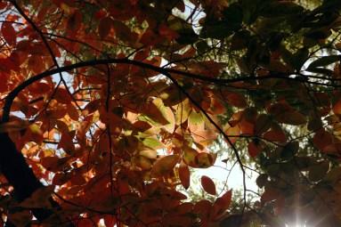 newzealand-autumn01