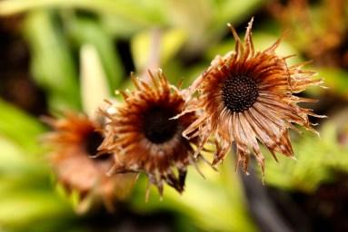 tongariro new zealand flowers